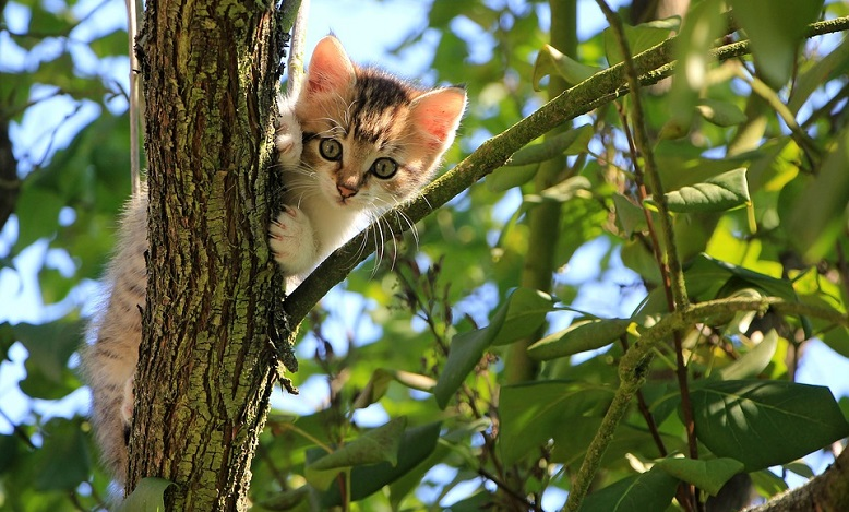 Dreams About Kittens – Interpretation and Meaning