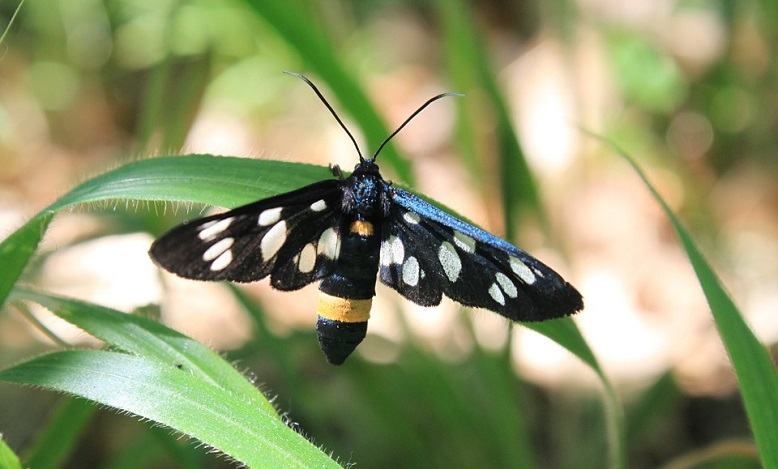 Black Moth – Meaning and Symbolism