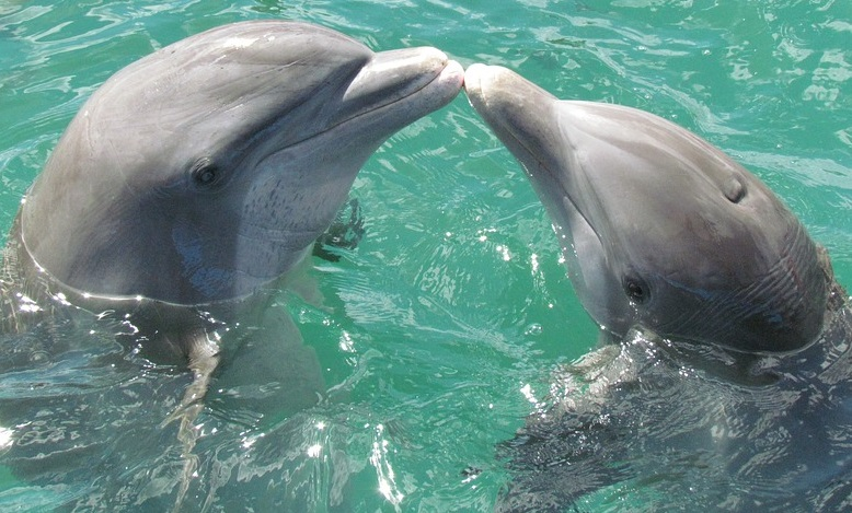 Dolphin – Spirit Animal, Totem, Symbolism and Meaning