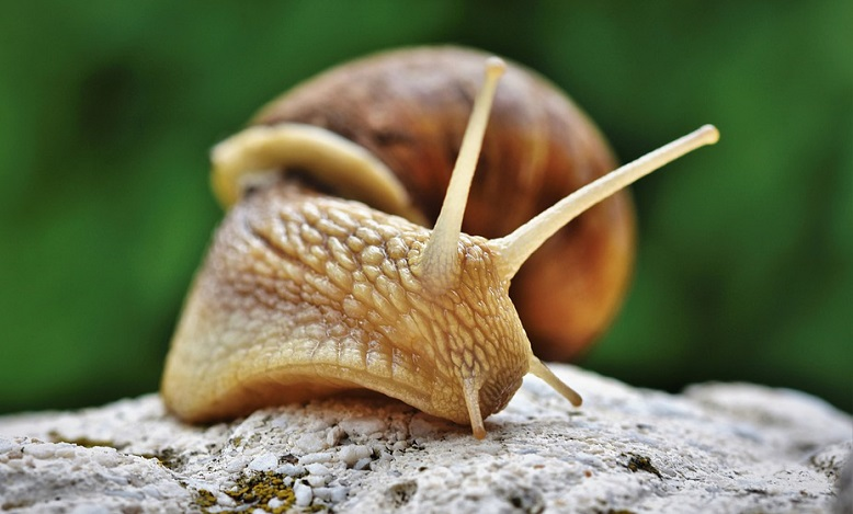 Dreaming of Snails – Meaning and Symbolism